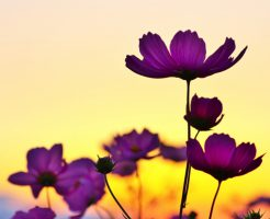 sunset_and_flower