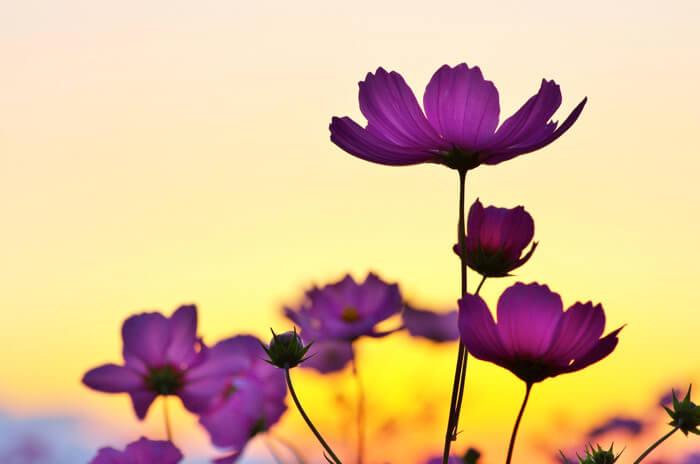 sunset_and_flower_700-1